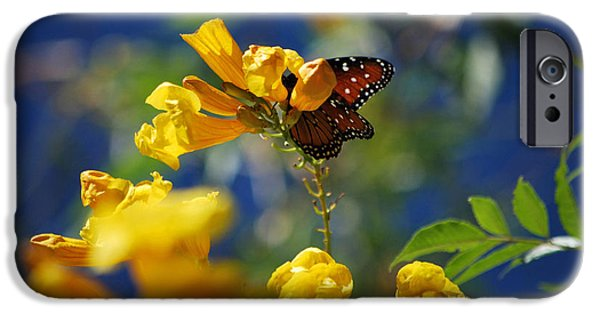 Bloosom iPhone Cases - Butterfly Pollinating Flowers  iPhone Case by Donna Van Vlack