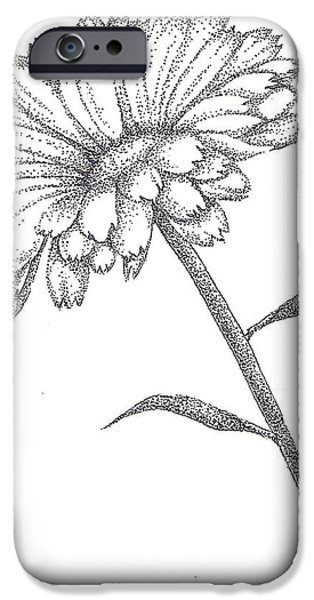 Flora Drawings iPhone Cases - Calendula iPhone Case by Christy Beckwith