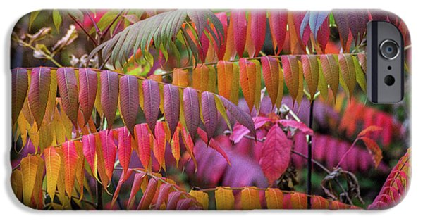 IPhone 6 Case featuring the photograph Carnival Of Autumn Color by Bill Pevlor