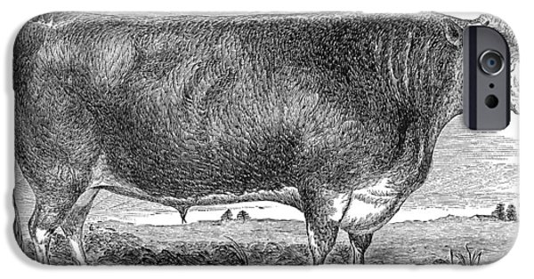 1880s iPhone Cases - CATTLE, c1880 iPhone Case by Granger