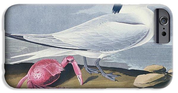 Sea Birds Paintings iPhone Cases - Cayenne Tern iPhone Case by John James Audubon