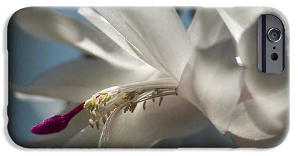 IPhone 6 Case featuring the photograph Christmas Cactus Blossom by Yulia Kazansky