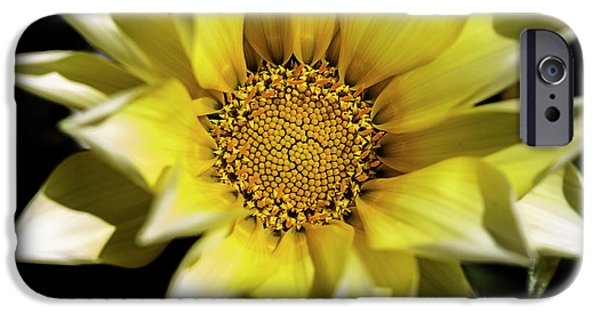 IPhone 6 Case featuring the photograph Chrysanthos by Linda Lees