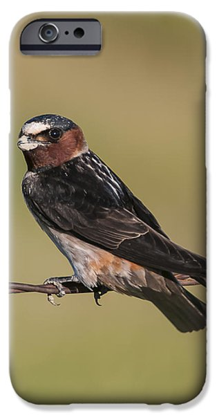 IPhone 6 Case featuring the photograph Cliff Swallow by Gary Lengyel