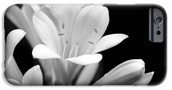Monotone iPhone Cases - Clivia Flowers Black and White iPhone Case by Jennie Marie Schell