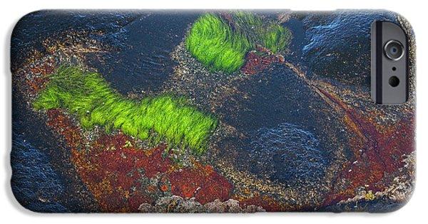 Alga iPhone Cases - Coastal floor at low tide iPhone Case by Heiko Koehrer-Wagner
