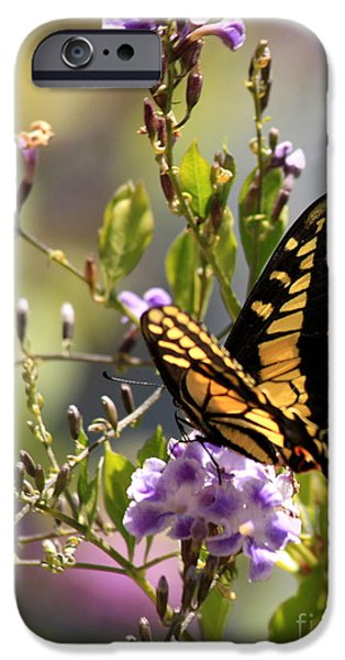 Flower Gardens Photographs iPhone Cases - Colorful Butterfly iPhone Case by Carol Groenen