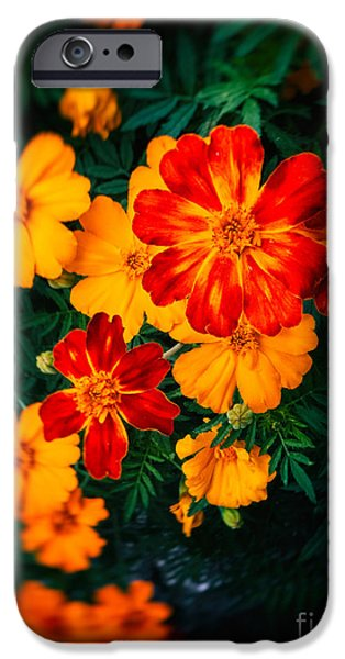 IPhone 6 Case featuring the photograph Colorful Flowers by Silvia Ganora