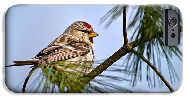 IPhone 6 Case featuring the photograph Common Redpoll Bird by Christina Rollo