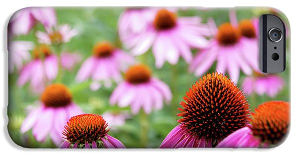 Coneflowers IPhone 6 Case by David Chandler