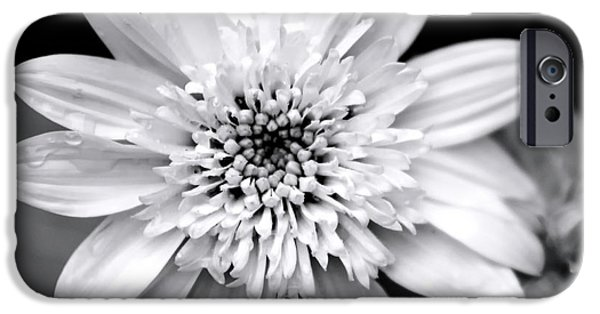 IPhone 6 Case featuring the photograph Coreopsis Flower Black And White by Christina Rollo