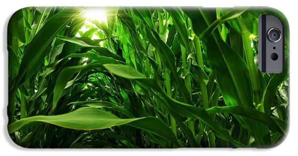 Backgrounds iPhone Cases - Corn Field iPhone Case by Carlos Caetano