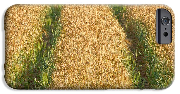 Field. Cloud iPhone Cases - Corn field iPhone Case by Heiko Koehrer-Wagner