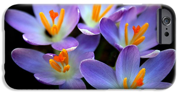 IPhone 6 Case featuring the photograph Crocus Aglow by Jessica Jenney