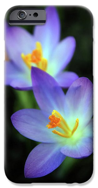IPhone 6 Case featuring the photograph Crocus In Bloom by Jessica Jenney
