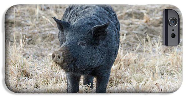 IPhone 6 Case featuring the photograph Cute Black Pig by James BO Insogna