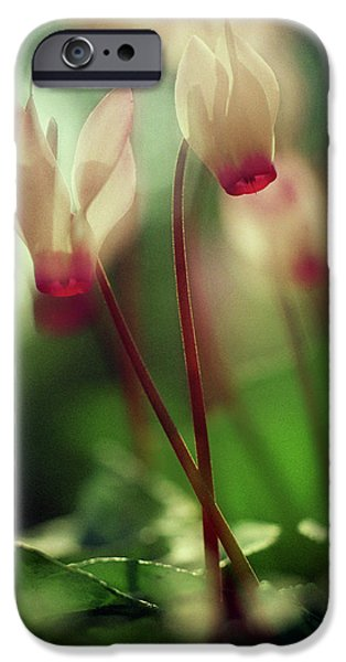 Cyclamens IPhone 6 Case by Dubi Roman