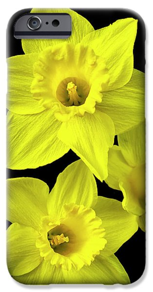 IPhone 6 Case featuring the photograph Daffodils by Christina Rollo