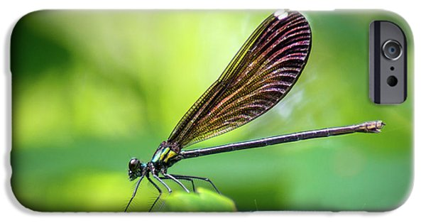 IPhone 6 Case featuring the photograph Dark Damsel by Bill Pevlor
