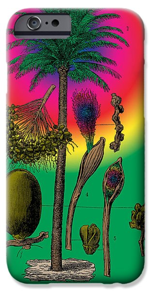 1870 Mixed Media iPhone Cases - Date Palm iPhone Case by Eric Edelman