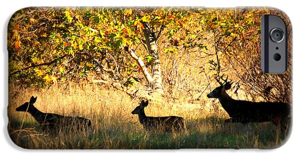 Park Scene Digital Art iPhone Cases - Deer Family in Sycamore Park iPhone Case by Carol Groenen