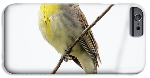 Dickcissel  IPhone 6 Case