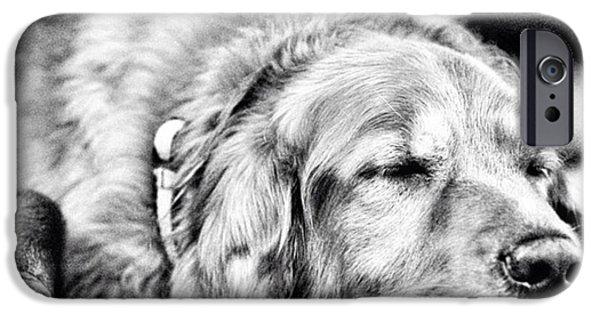 Summer iPhone 6 Case - Dog Days Of Summer #tucker #louisiana by Scott Pellegrin