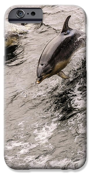 Dolphins IPhone 6 Case by Werner Padarin