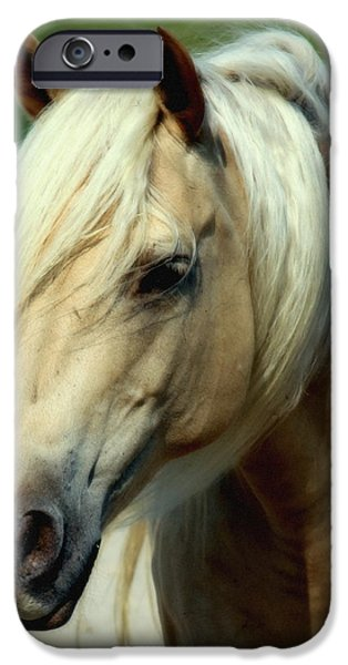 Horse iPhone Cases - Dreams of Honey iPhone Case by Karen Wiles