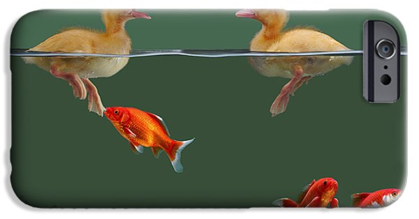Domesticated Animals iPhone Cases - Ducklings And Goldfish iPhone Case by Jane Burton