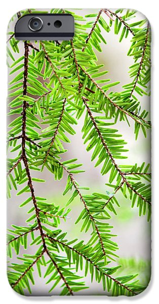 IPhone 6 Case featuring the photograph Eastern Hemlock Tree Abstract by Christina Rollo