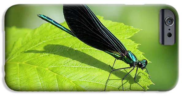 Ebony Jewelwing IPhone 6 Case