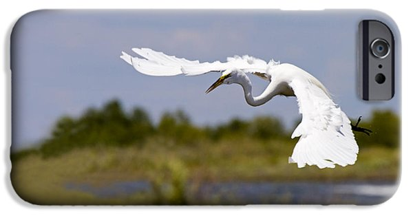 Flight iPhone Cases - Egret Ballet iPhone Case by Mike  Dawson