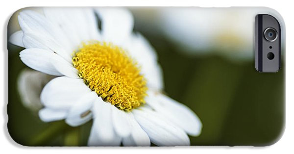 Flora iPhone Cases - Elegance of a daisy iPhone Case by Vishwanath Bhat