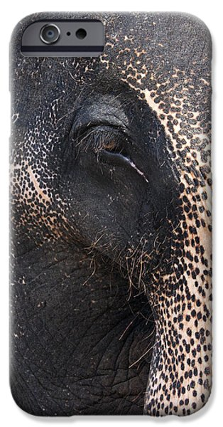 Aged iPhone Cases - Elephant iPhone Case by Jane Rix