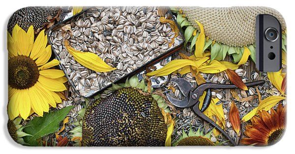 Sunflower Seeds iPhone 6 Case - End Of Season by Tim Gainey