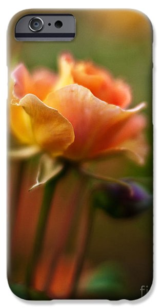 Rose iPhone Cases - Evening Rose iPhone Case by Mike Reid
