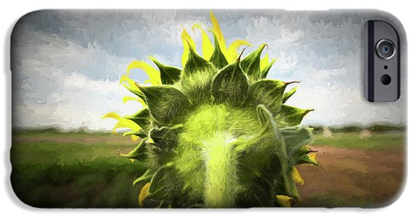Sunflower Seeds iPhone 6 Case - Facing The Day by Stephen Stookey