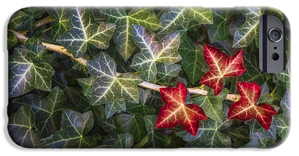 IPhone 6 Case featuring the photograph Fall Ivy Leaves by Adam Romanowicz