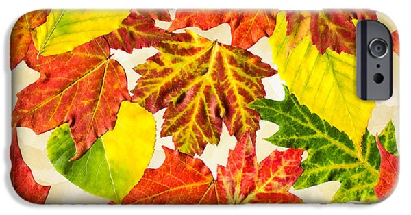 IPhone 6 Case featuring the mixed media Fall Leaves Pattern by Christina Rollo