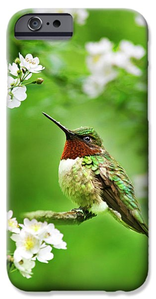 Fauna And Flora - Hummingbird With Flowers IPhone 6 Case