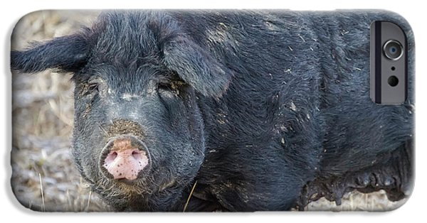 IPhone 6 Case featuring the photograph Female Hog by James BO Insogna