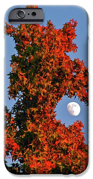 Cmlbrown iPhone Cases - Fire Dragon Tree Eats Moon iPhone Case by CML Brown