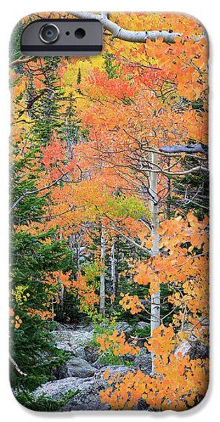 Flaming Forest IPhone 6 Case by David Chandler