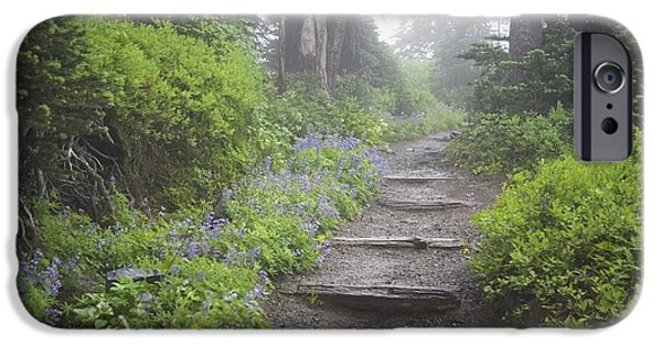 Recently Sold -  - Rainy Day iPhone Cases - Foggy Forest Path iPhone Case by Craig Tuttle