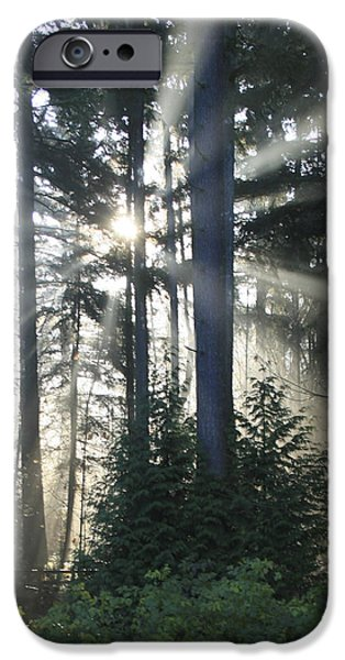 Morning iPhone Cases - Forest Sunrise iPhone Case by Crista Forest