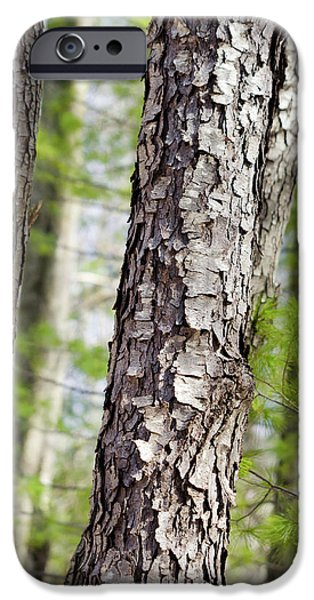 IPhone 6 Case featuring the photograph Forest Trees by Christina Rollo