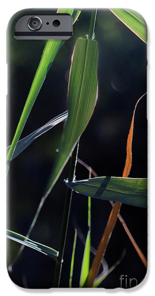 IPhone 6 Case featuring the photograph Fragment by Linda Lees
