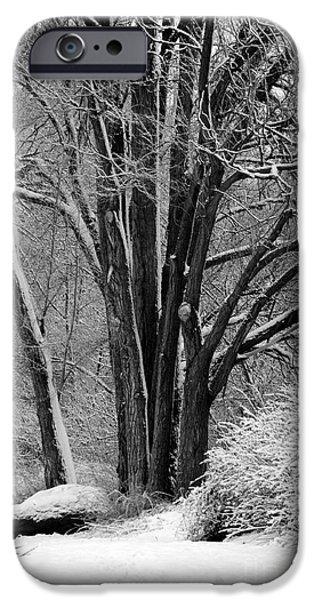 Fresh Snow iPhone Cases - Fresh Snow  iPhone Case by Carol Groenen
