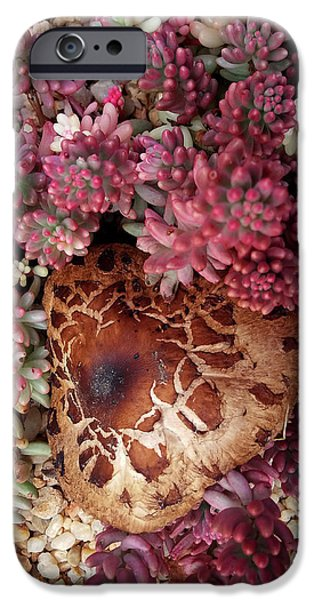 Fungus And Succulents IPhone 6 Case